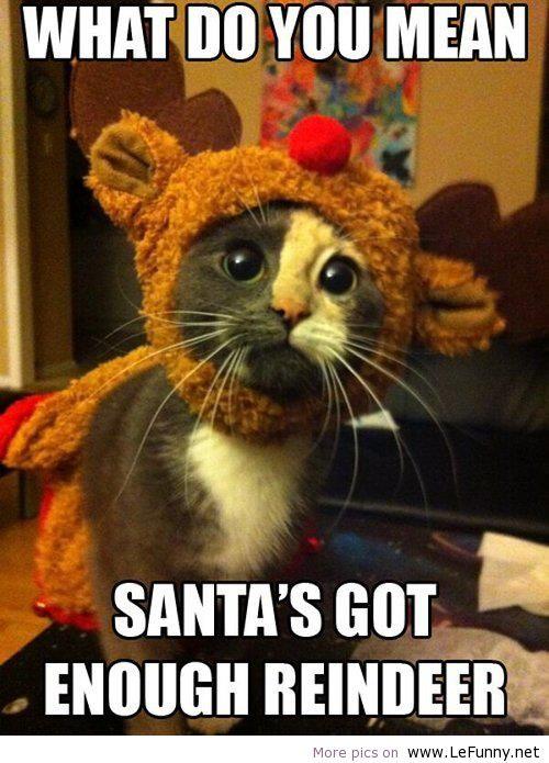 Christmas Smiles - What Do You Mean Santa's Got Enough Reindeer